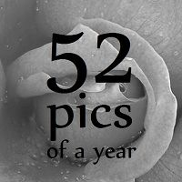 52 pics of a year (1/3)